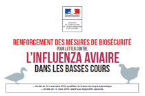 INFLUENZA AVIAIRE – Elévation du niveau de risque et mesures contre l'IAHP H5N8