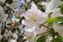 Un doux bruissement dans nos arbres en fleurs